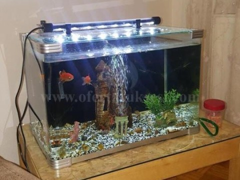 Shes akuarium