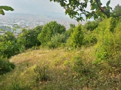 Shes 27.31 ari toke / Prizren