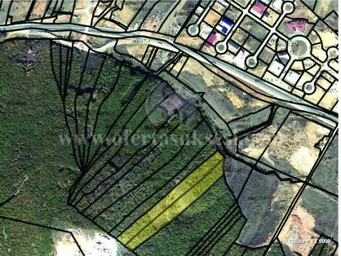 Shes ose Jap me qira 4 hektar toke / Drenas