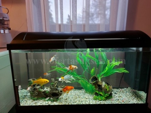 Shes aquariumin