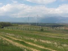 Shes 100 hektar toke / Kline