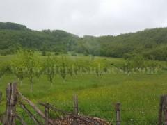 Shes 2 hektar toke / Prapashtice-Prishtine