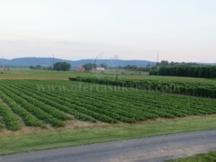 Shes 1.7 hektar mjedra te pa vjelura