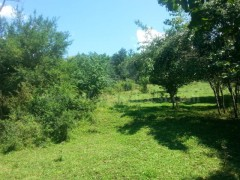 Shes 4.5 hektar toke ne fshatin Keqekoll